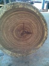 Tropical Wood  Logs - Interested in Zingana logs, quality LM, TRANCHAGE, FOR PRODUCTION OF VENEER.