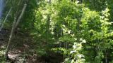 Woodlands - Romania, Beech (Europe)