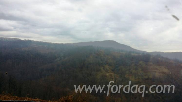 Beech-%28Europe%29-Woodland-from-Romania-4350000-m2