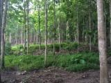 Woodlands - SELL NATIONAL FOREST OF TEAK AND OTHER WOOD