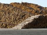 Nadelrundholz Zu Verkaufen - Stämme Für Die Industrie, Faserholz