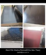 Phenolic board/construction marine plywood