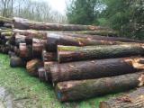 40+ m Oak (European) Saw Logs in France