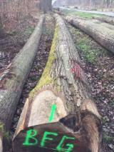 Hardwood Logs importers and buyers - Purchase Red Oak Logs ABC quality