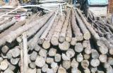 Find best timber supplies on Fordaq - Fir (Abies Alba, Pectinata) -- cm constructii Construction Round Beams in Romania