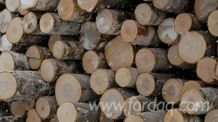 Tree Bark Veneer : Exporting birch veneer logs