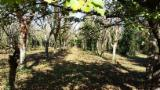 Standing Timber for sale. Wholesale Standing Timber exporters - High Quality Italian Walnut Trees