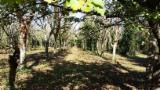 Bois Sur Pied à vendre - Vend Noyer Abruzzo Italie