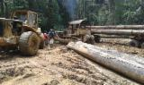 Tropical Wood  Logs - doussie logs for sale