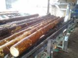 Complete Company For Sale - Sawmill in Belarus