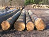 Good quality Beech logs available for immediate supply