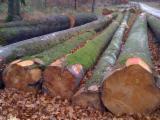 Hardwood  Logs Acacia For Sale - BEECH logs
