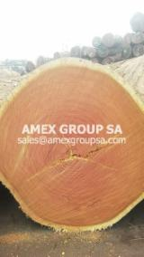 Tropical Wood  Logs For Sale - Doussie logs