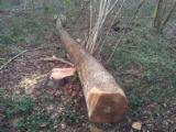 Hardwood  Logs For Sale - Sycamore or European Maple logs available
