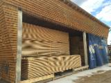 Nadelschnittholz, Besäumtes Holz Sibirische Kiefer - Kiefer  - Föhre, Seekiefer, Sibirische Kiefer