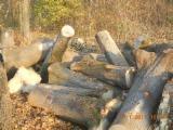 Drewno Liściaste Kłody Wymagania - Kłody Tartaczne, Jesion Amerykański