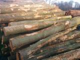 Netherlands Hardwood Logs - 10+ cm Beech (Europe) Firewood in Netherlands