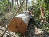 Tropical Wood  Sawn Timber - Lumber - Planed Timber - Hardwood from Amazon Forest