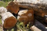 Tropical Wood  Logs - Teak round logs from Panama