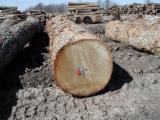 Hardwood  Logs Demands - Looking for white Oak logs