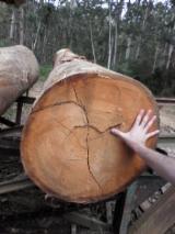 Tropsko Drvo  Trupci - Za Rezanje, Eucalyptus, Brazil, FSC