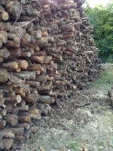 Wholesale  Firewood Woodlogs Not Cleaved PEFC FFC - Hardwoods in 2ml for heating or grinding