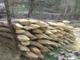 Hardwood  Logs Acacia For Sale -  Conical shaped round wood, Acacia