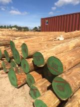 Hardwood Logs importers and buyers - We require Eucalyptus logs