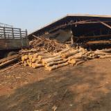 Tropical Wood  Logs For Sale - Teak logs From Laos for sale