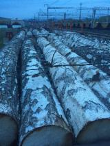 14-40 m Birch (Europe) Saw Logs from Russia, ЕАО