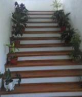 Beech  Finished Products - Hardwood (Temperate), Beech (Europe), Stairs
