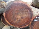 Wälder Und Rundholz Asien - Schnittholzstämme, Tali