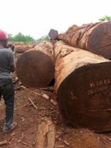 Cameroon Hardwood Logs - Saw logs, tropical, 70 cm diameter