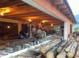 Romania Complete Company For Sale - Sawmill For Sale in Romania