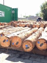Tvrdo Drvo  Trupci - Za Rezanje, Eucalyptus