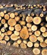 null - Oak (European) Firewood/Woodlogs Cleaved