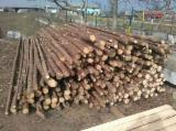 Softwood  Logs For Sale - Fir/Spruce 8+ cm AB Construction Round Beams from Romania