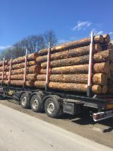 Poland Softwood Logs - REDWOOD LOGS AVAILABLE