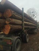 Meko Drvo  Trupci Za Prodaju - Za Rezanje, Ariš
