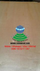 Plywood Birch Europe For Sale - C, D, E, F grade birch plywood
