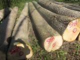 Hardwood  Logs - Saw Logs, Ash (White)