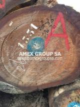 Tropical Wood  Logs - Makore/Douaka logs (Tieghemella heckelii)