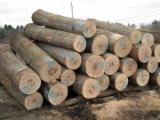 Hardwood  Logs - European White Oak Round Logs