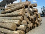 Tvrdo Drvo  Trupci - Za Rezanje (Furnira), Ash (White)(Europe)