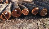 Tvrdo Drvo  Trupci - Za Rezanje, Orah (Azija)