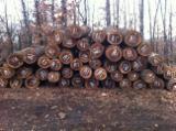 Tvrdo Drvo  Trupci - Za Rezanje, Orah (evropski)