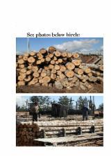 Hardwood  Logs - European Birch logs