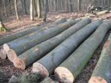Hardwood  Logs Acacia For Sale - Beech Round Logs