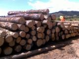Radiata Pine Logs - A Grade