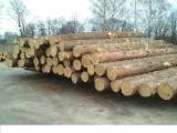Yunnan Pine Softwood Logs - Spruce Round Logs